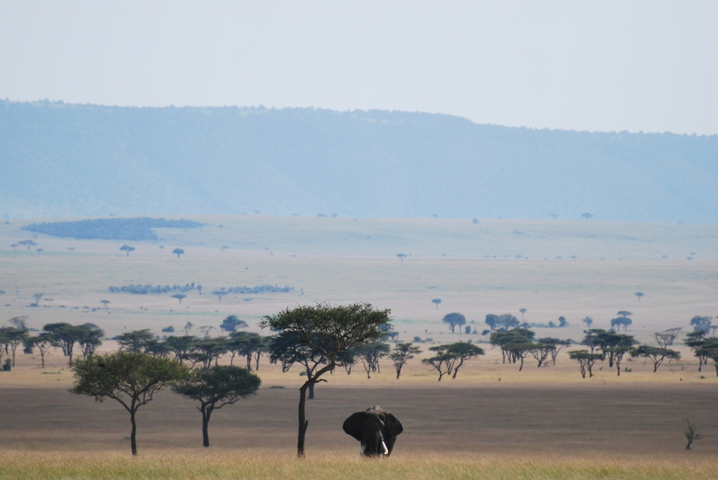 Big Tusker - the view into Kenya