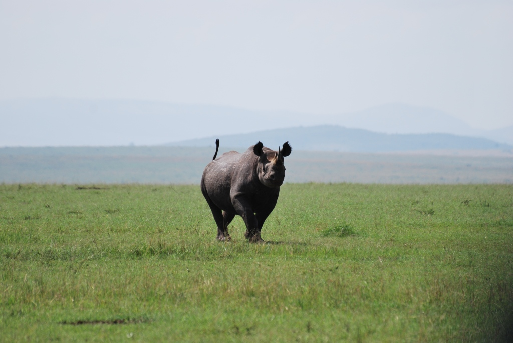 Black Rhino - North of the Mara River