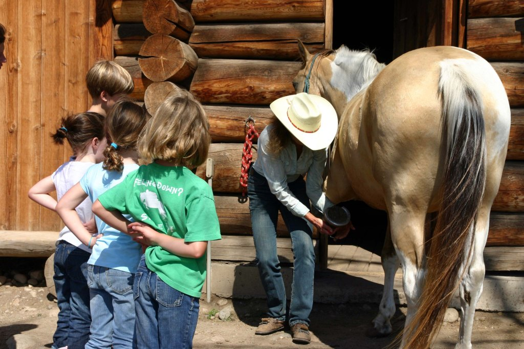 Horse care at Siwash lake