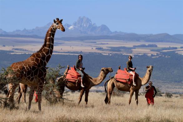 Safari by camel