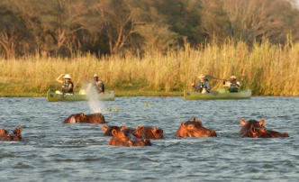 Canoeing with hippos