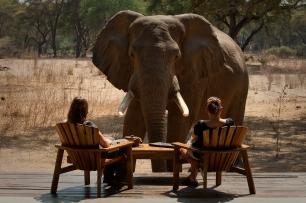 Friendly elehant