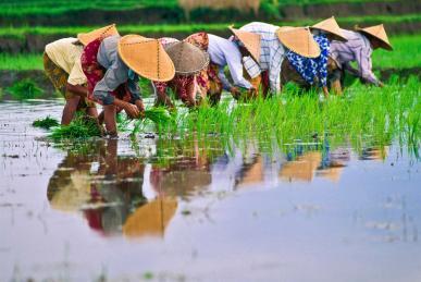 Culture in Indonesia