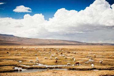 Peru's rolling plains